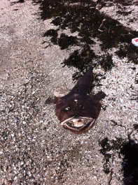 ewwww... dead fish